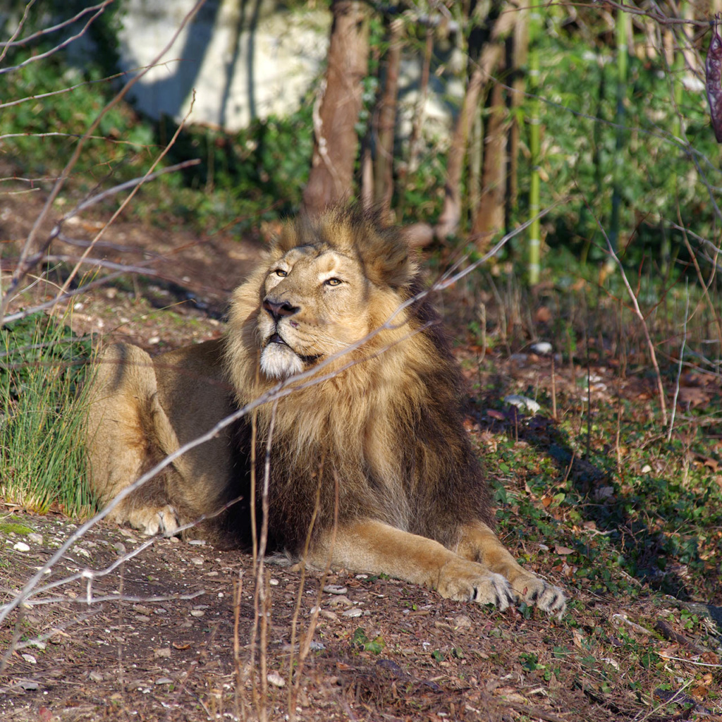 Zoos / Parcs animaliers - Page 25 Imgp7819
