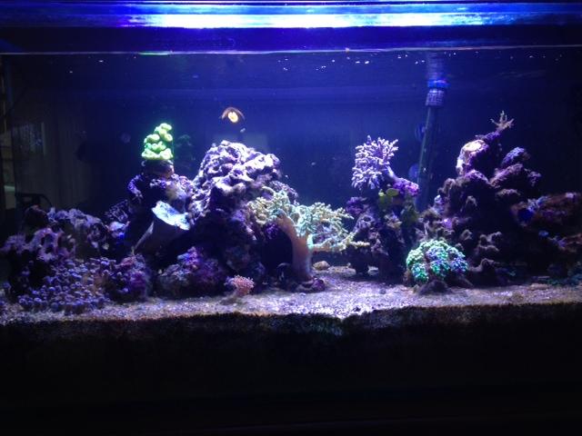 Aquarium  200 l - Page 10 Photo_13