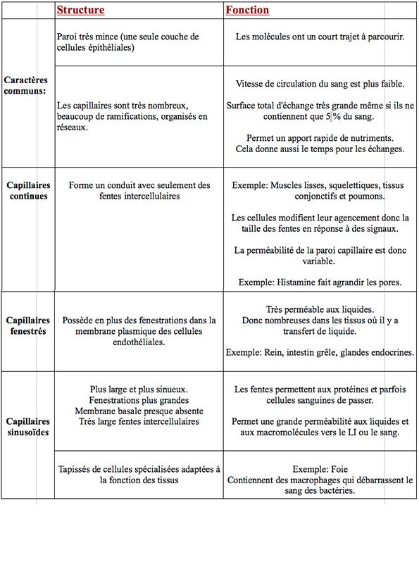 3/ Les différents types de capillaires (structure/fonction) Questi10