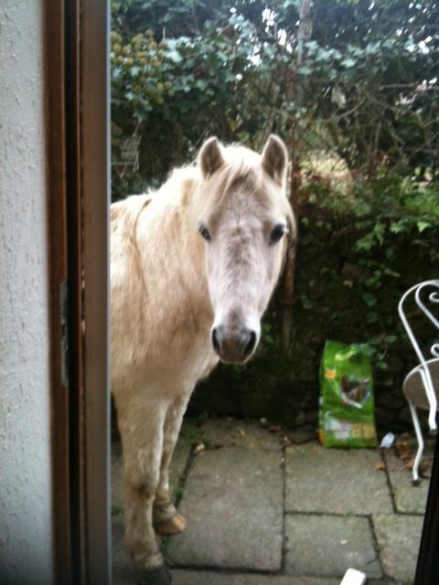 (Dpt 23) GENEREUX, poney ONC réservé par Sabnat23 !!!!!!!!!!!!!!!! (Nov 2011) Ganare10
