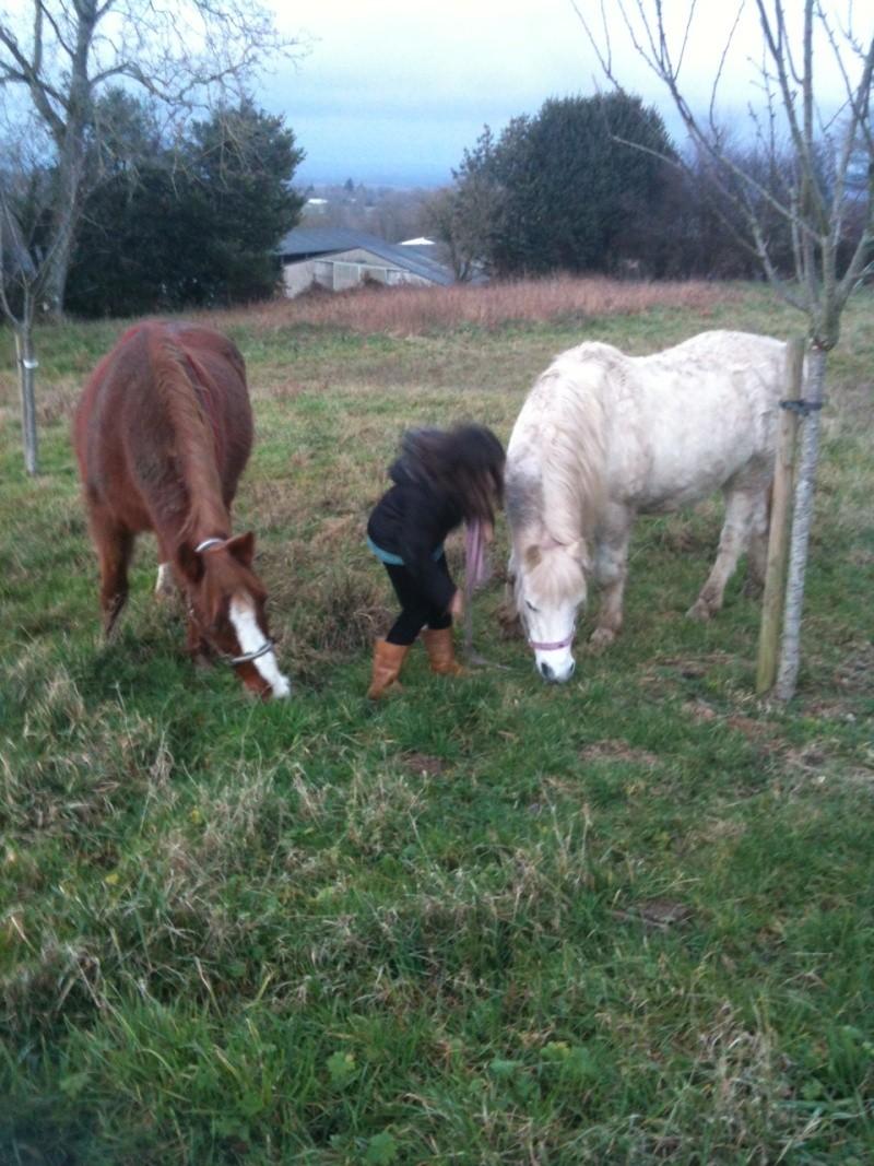 (Dpt 23) GENEREUX, poney ONC réservé par Sabnat23 !!!!!!!!!!!!!!!! (Nov 2011) Q_et_g10