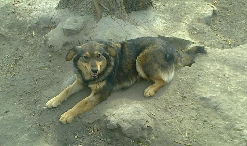 NEJRA, F-X, née mars 2013, 20kg (Etela) - En FA chez Nadine_10 (Départ10) Nejra_11