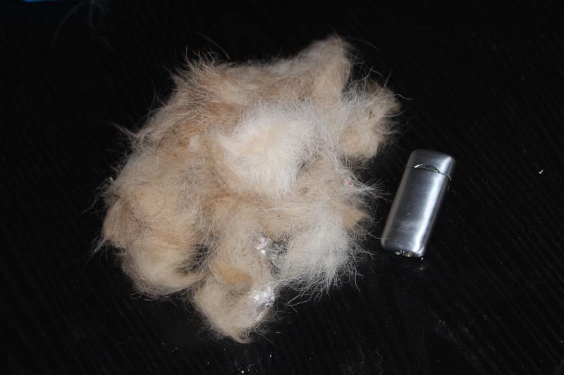 Puma perd énormément de poils Img_2710