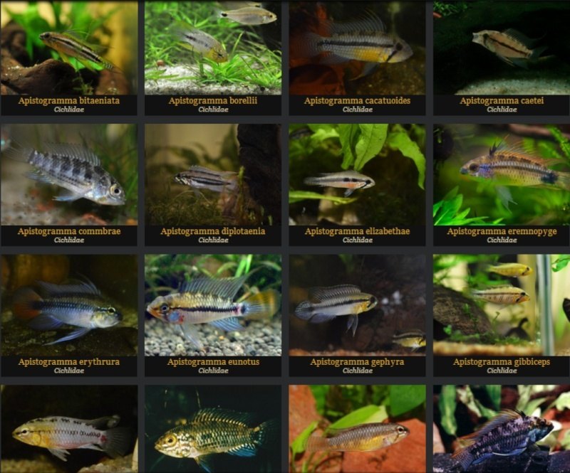 fishipedia Liste_13