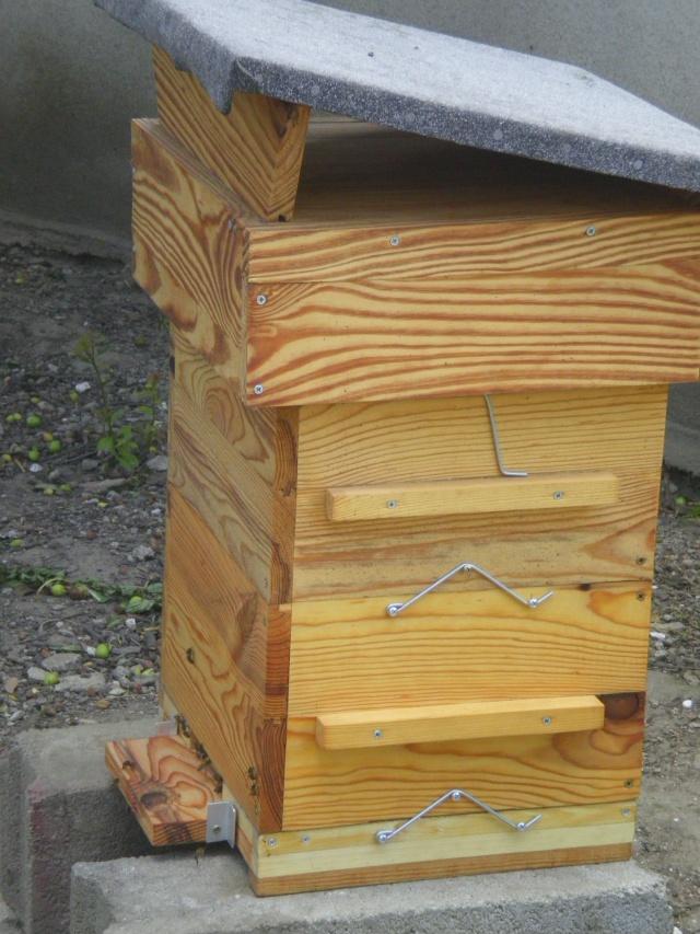 Chronique de mes abeilles Imgp0129