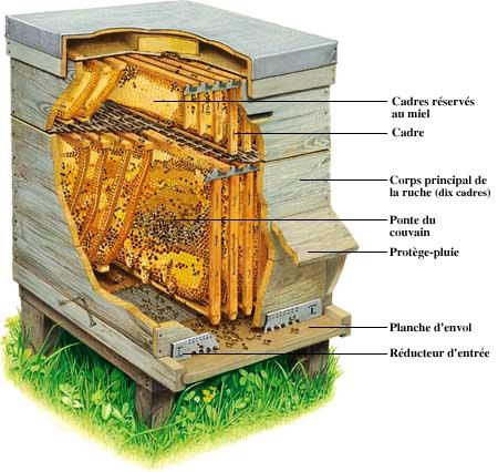 Apiculture ruche abeille miel Ruche510