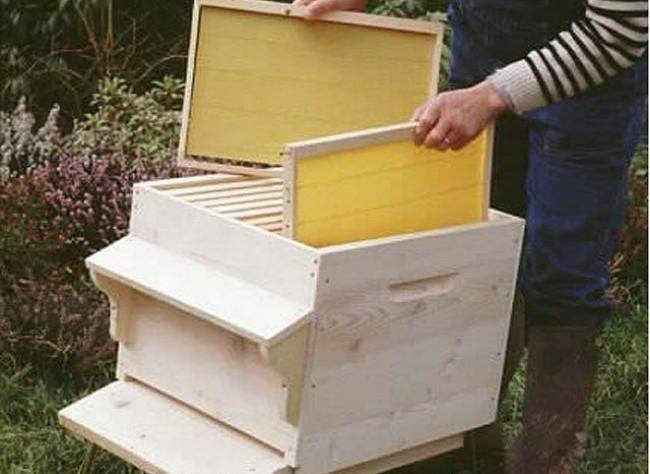 Apiculture ruche abeille miel Ruche610