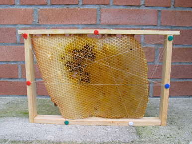 Apiculture ruche abeille miel Ruche810