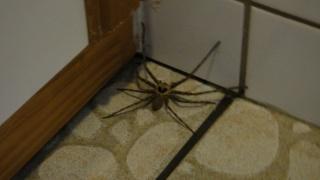 La magnificence des araignées Dsc00410