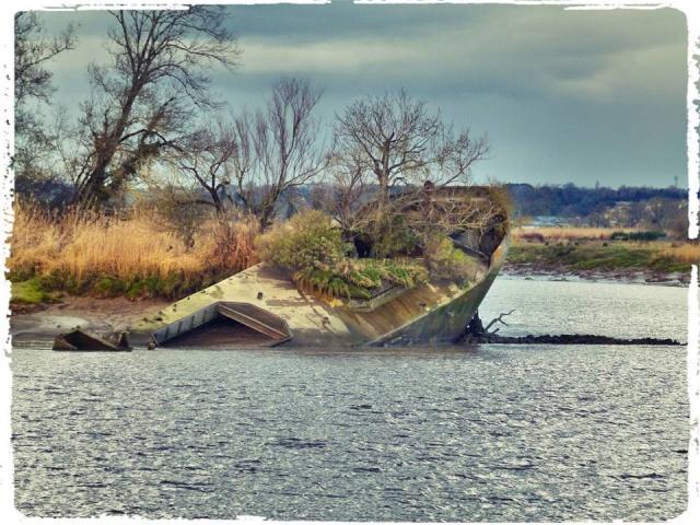 Photos de Bords de Garonne et de l'Estuaire de la Gironde par Forum du Médoc 10143010