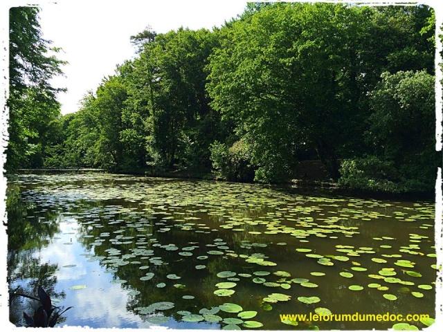 Parc de Majolan à Blanquefort vu par Forum du Médoc 10173510