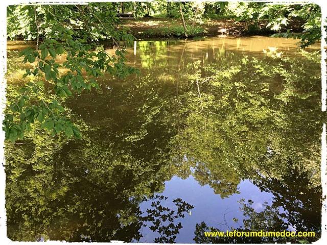 Parc de Majolan à Blanquefort vu par Forum du Médoc 10339610