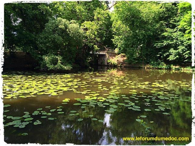 Parc de Majolan à Blanquefort vu par Forum du Médoc 10361410