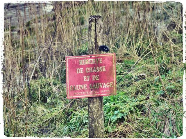 Photos de Bords de Garonne et de l'Estuaire de la Gironde par Forum du Médoc 15257510