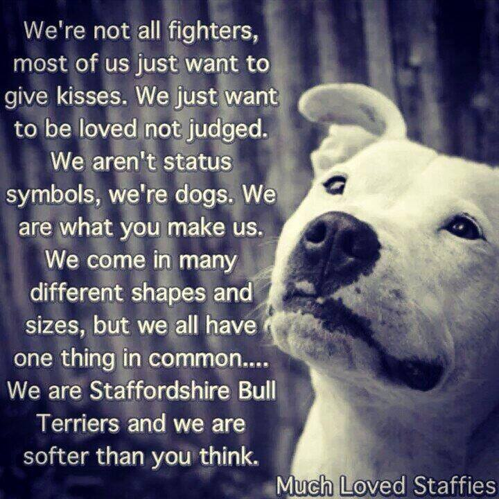 Everyone read/see this picture. So true!! Staffy11