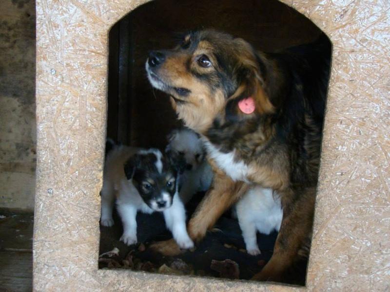 Aider les chiens de Roumanie 10264610