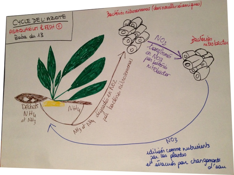Chapitre VI - Le cycle de l'azote Schama12