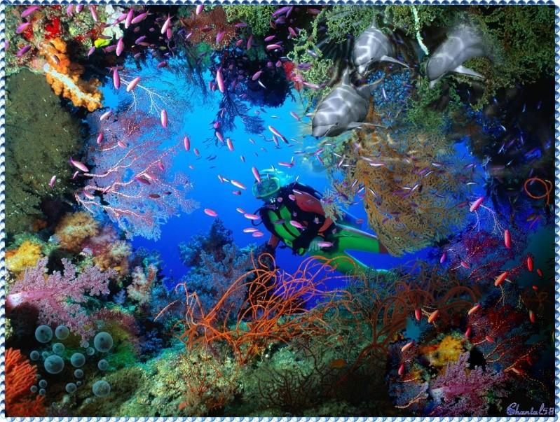 Mes créas - Divers ... 50d41e10