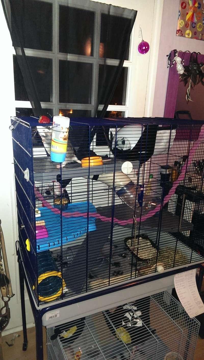 je viens d'amenager ma cage et je pense deja à la changer  Imag0210