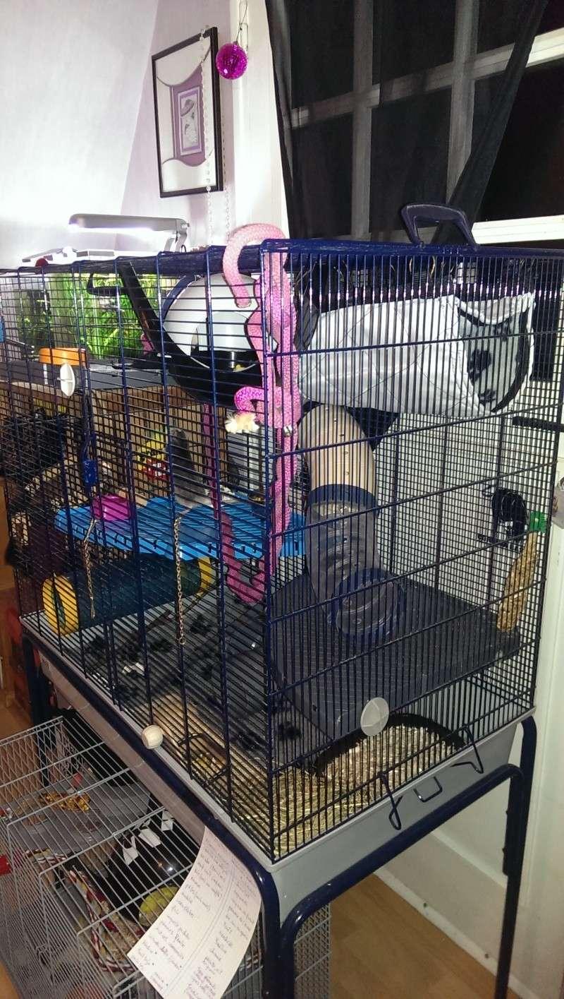 je viens d'amenager ma cage et je pense deja à la changer  Imag0211