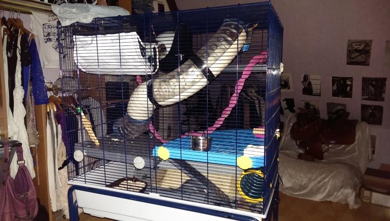 je viens d'amenager ma cage et je pense deja à la changer  Imag0311