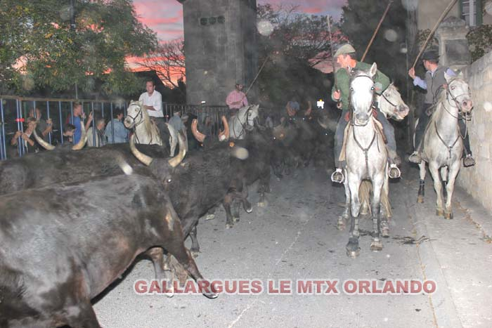 07..11..2013..GALLARGUES LE MTX Img_1010