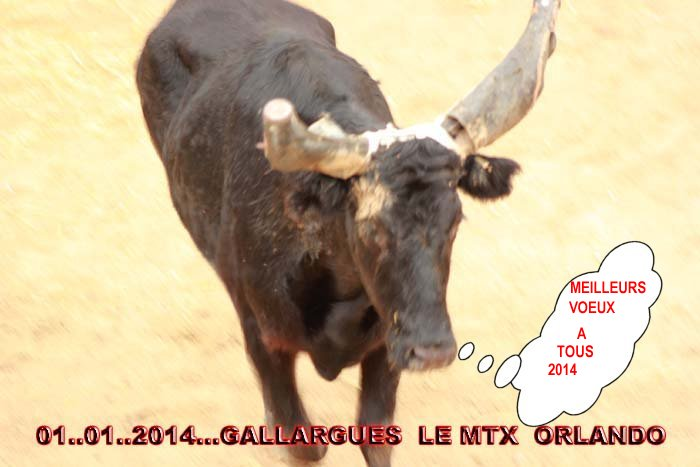 ...01..01..204....GALLARGUES  LE  MTX   ... ROBERT..H Img_1910