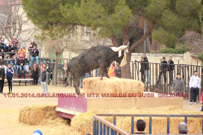 11.01..2014....GALLARGUES LE MTX  Img_2113
