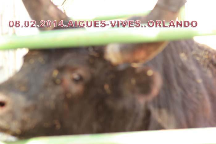 .......08..02..2014... AIGUES-VIVES..Manade..Lafont  &  LES CORREGES Img_2312