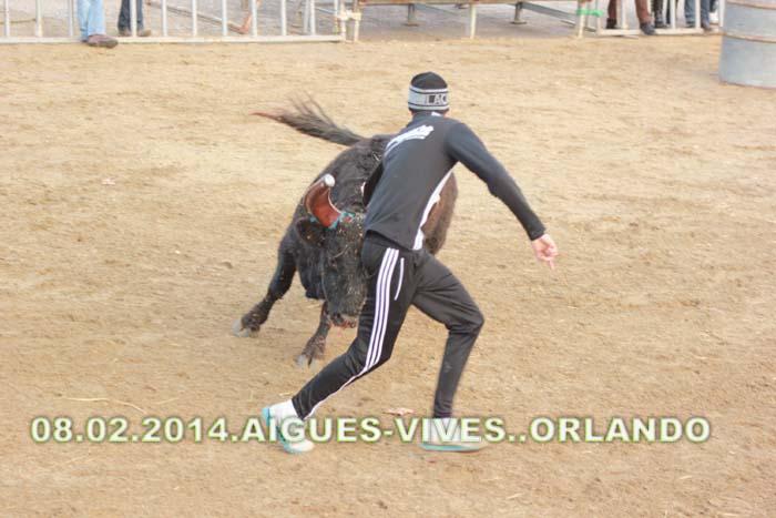 .......08..02..2014... AIGUES-VIVES..Manade..Lafont  &  LES CORREGES Img_2313
