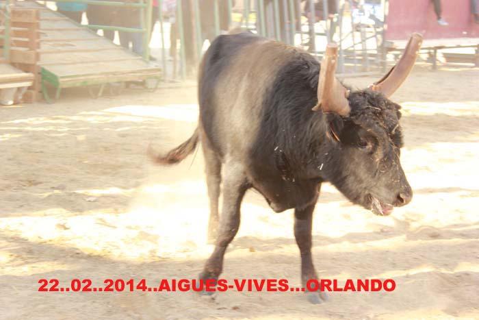 22...02..2014...AIGUES-VIVES  avec les Manades  Vidal & Rambier Img_2710