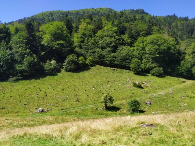 Road Trip dans les Pyrénées à Bedous Vallée Aspe Béarn… Img_2576