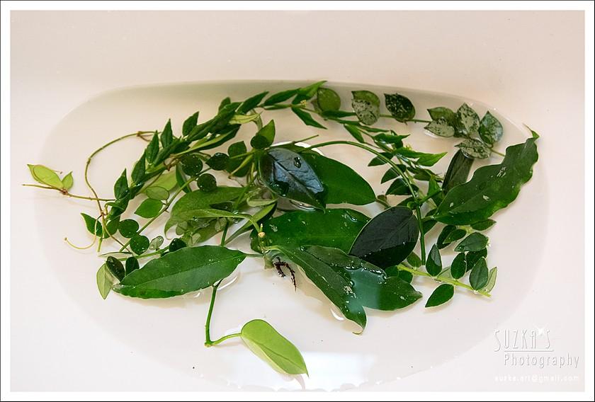 Gemischter Salat Pk3a0521