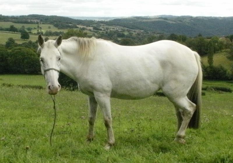 RIGANE - Appaloosa née en 2005 - annonce désactivée à la demande du propriétaire P1020210