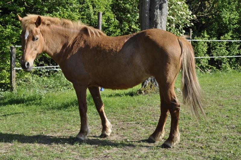 PRALINE - poney typée PFS née en 2001 - gardée par sa propriétaire Pralin15