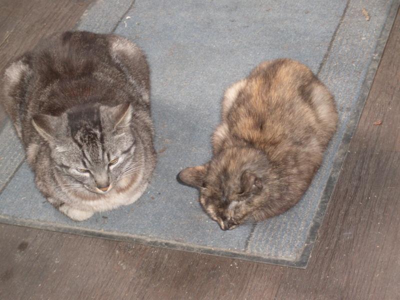 des nouvelles de Iroise et Ernest Cats_110
