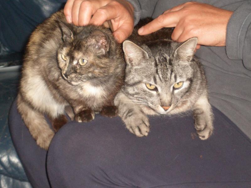 des nouvelles de Iroise et Ernest Cats_m11