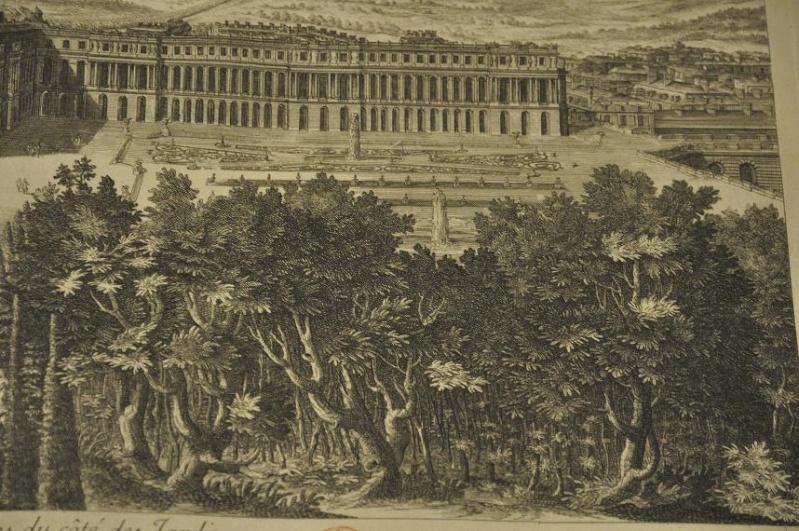 Expo Bosquet du Labyrinthe à la bibliotheque municipale - Page 2 Lab_2110