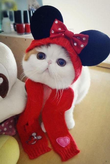 Le chat le plus mignon du monde Snoopy10