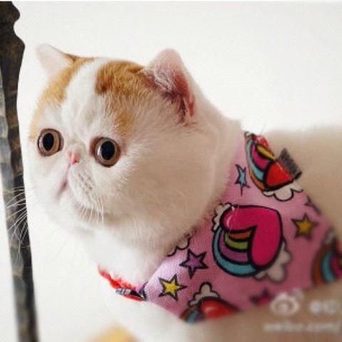 Le chat le plus mignon du monde Snoopy12