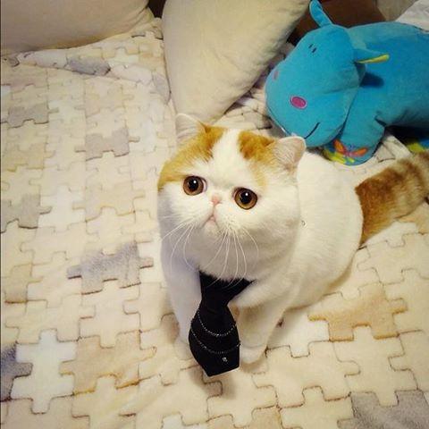 Le chat le plus mignon du monde Snoopy15