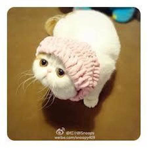 Le chat le plus mignon du monde Snoopy16