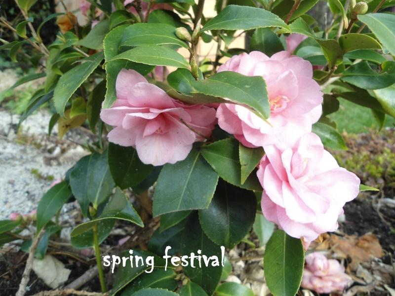 les camélias de perrine  Spring10