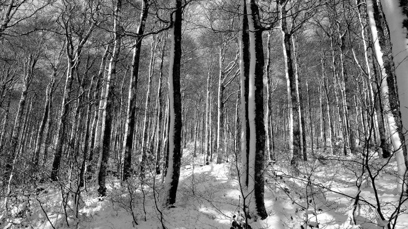 Premières neiges . P1080610