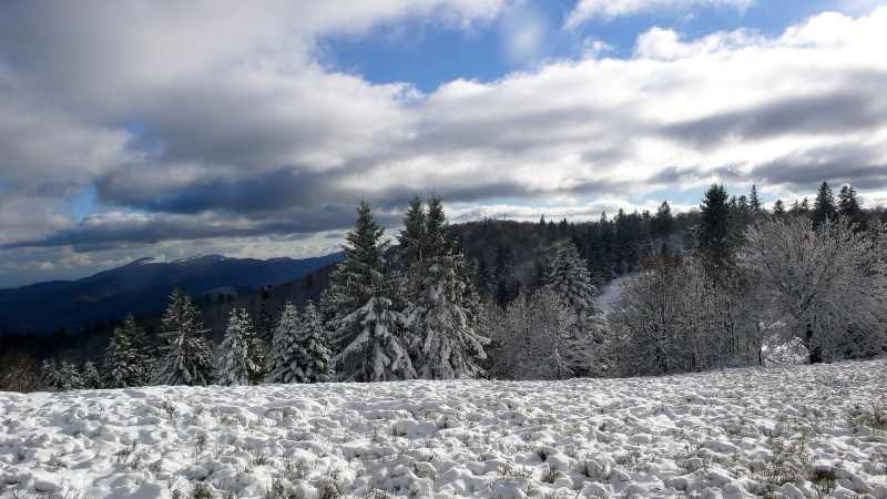Premières neiges . P1080617