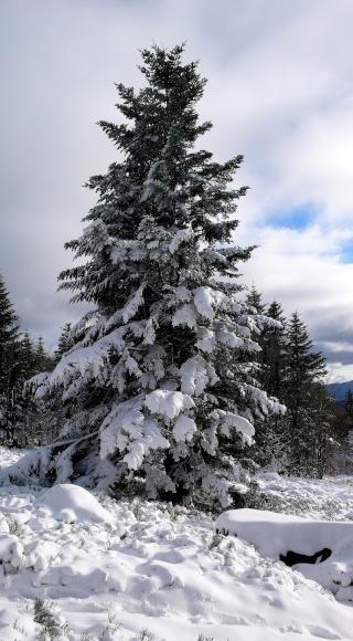 Premières neiges . P1080621