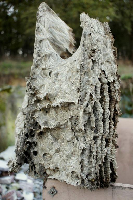 Nid de Vespula germanica Dsc00119