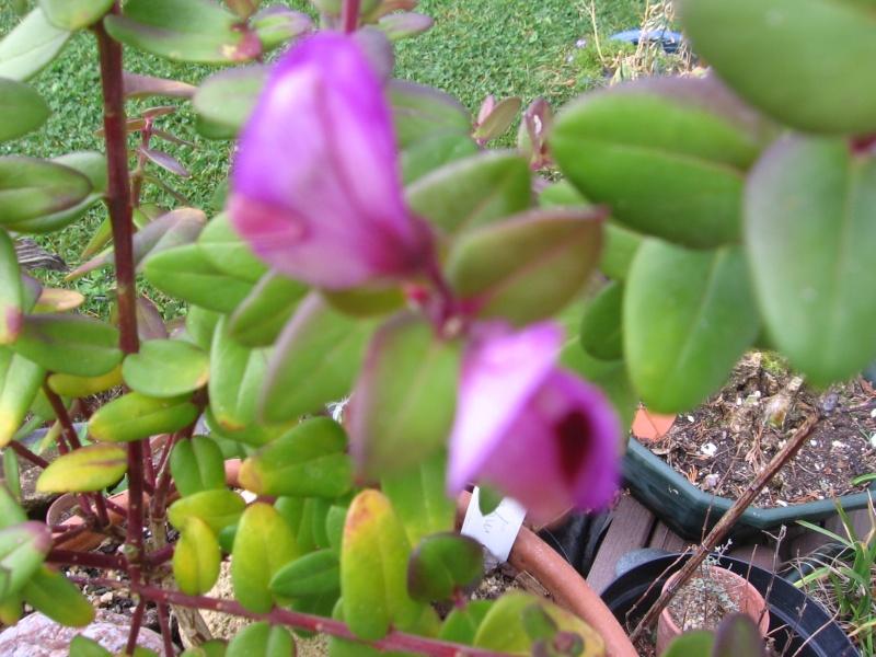 Des fleurs dans mon jardin Img_2626