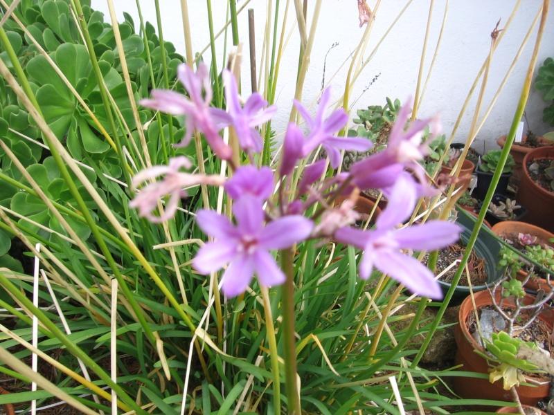 Des fleurs dans mon jardin Img_2628
