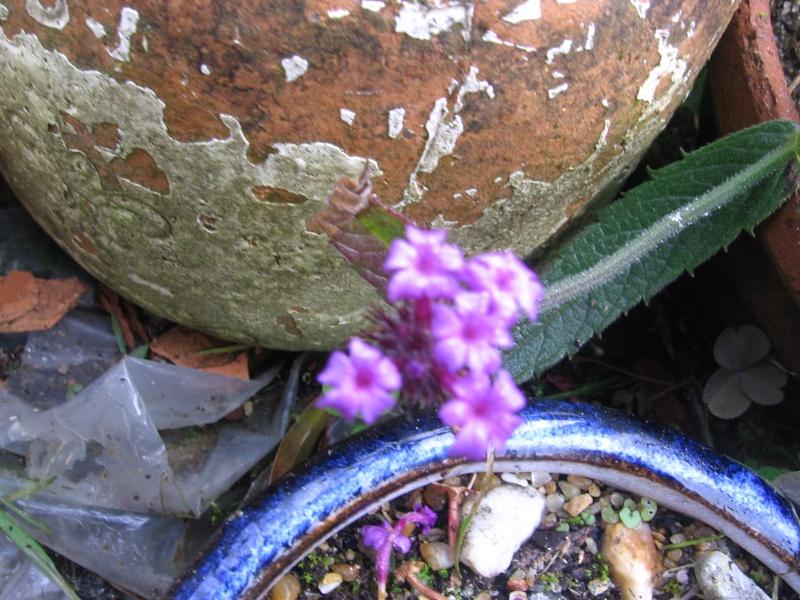 Des fleurs dans mon jardin Img_2629